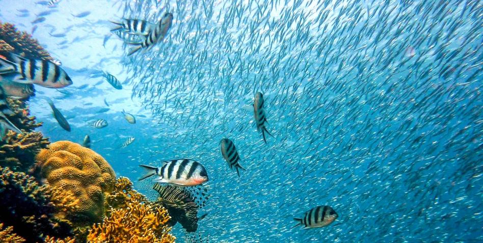 Bali Scuba Diving Escapade